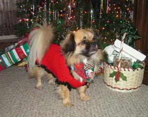 Christmas Tibbie
